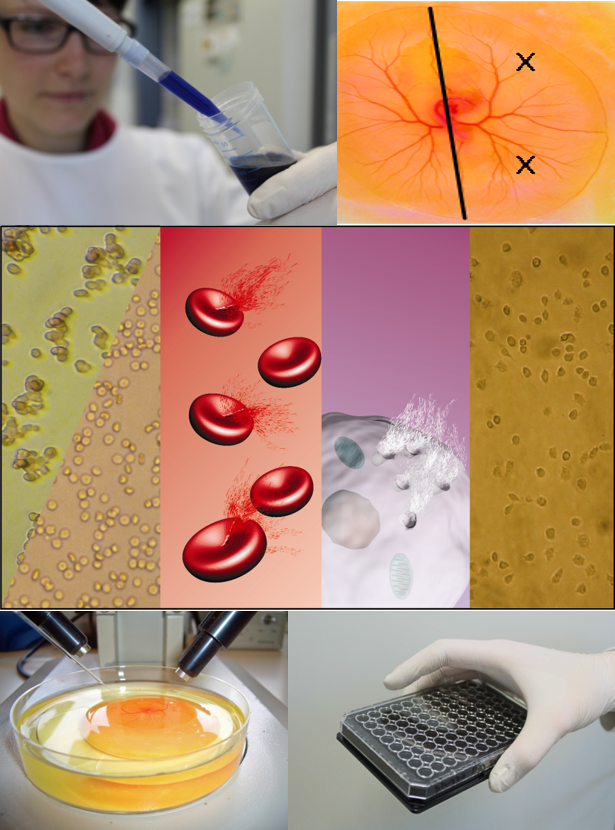 NanoBEL medizinische Nano-Anwendungen (c) NanoBEL Konsortium