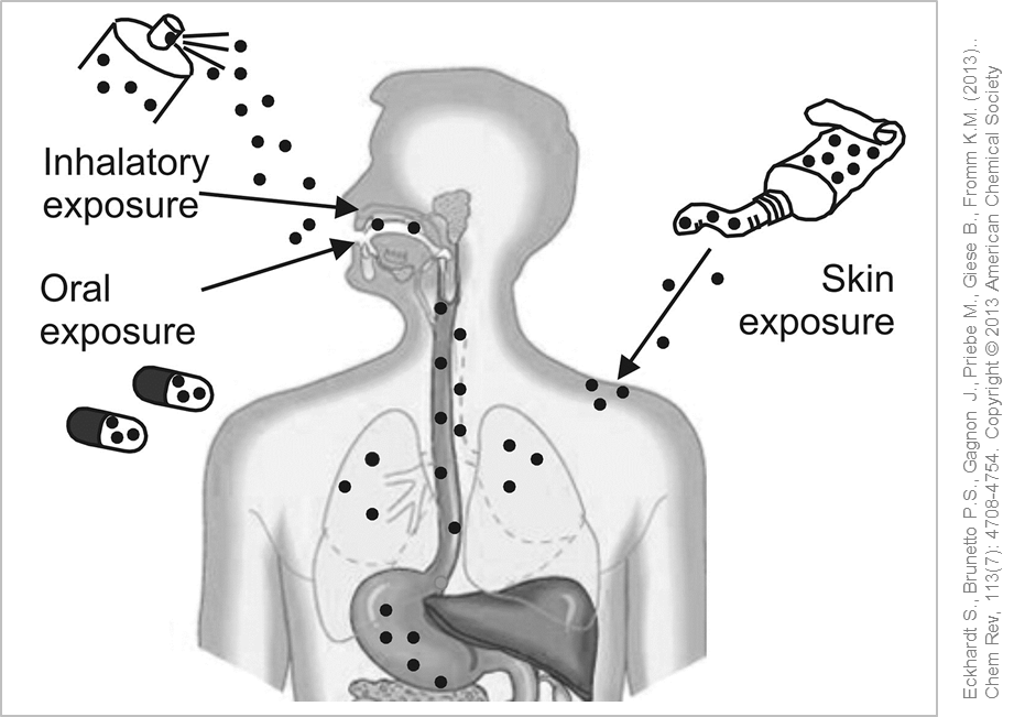 Possible entry routes of silver nanoparticles into the human body. © Eckhardt et al. (2013), Chem Rev, 113(7): 4708-4754.