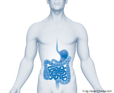 Illustration of a human torso with the digestive tract highlighted as an example of the uptake of nanomaterials via the digestive tract