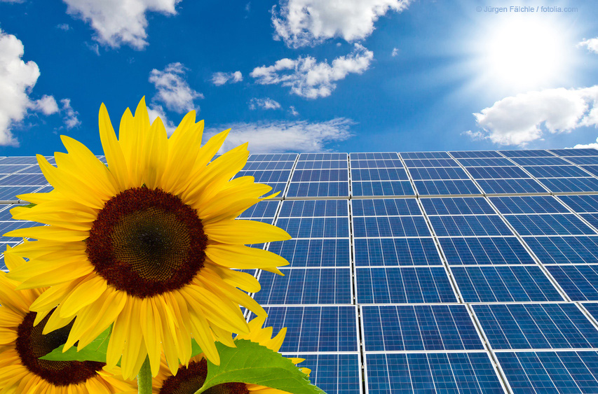 sunflower in front of a wall of solar cell panels as application example of titanium dioxide in solar cell panels