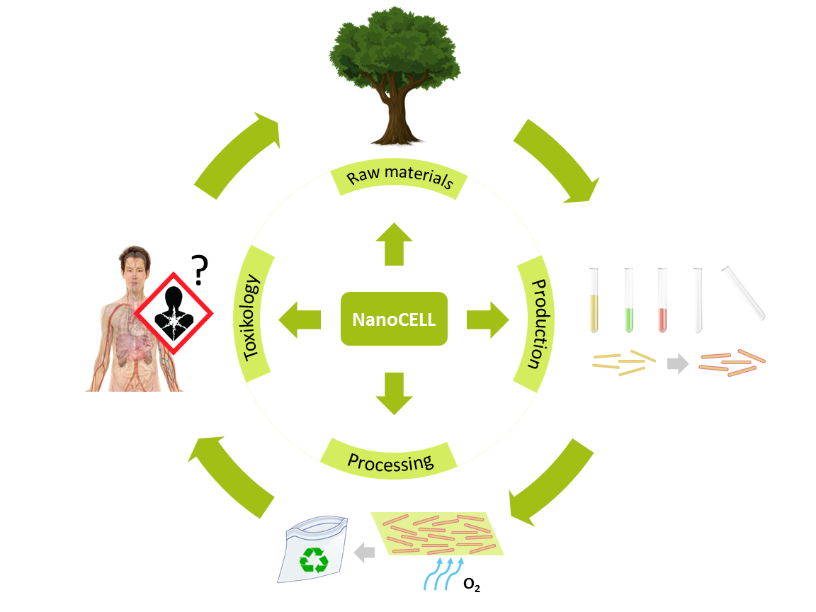 Description of NanoCELL's approach to research on nanocellulose for raw materials, extraction, processing and toxicology