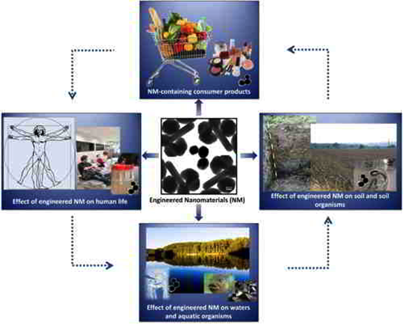 Nanoumwelt project plan