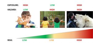 Different stages of risk scenario (Source from left to right: © dtvphoto/fotolia.com; dijital_kalem/fotolia.com; Zirkus Krone)
