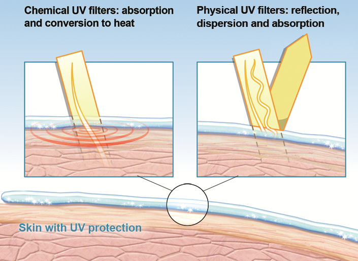 Infographic comparing physical and chemical UV filters that help protect the skin from harmful UV radiation.