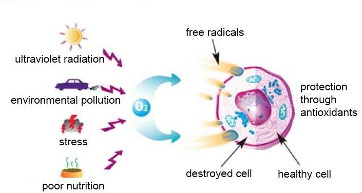 Immune system stress factors © www.tierfachmarkt.de