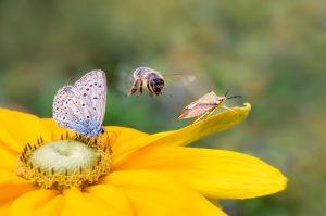 Insektenvielfalt auf einer Blüte © kathomenden - stock.adobe.com